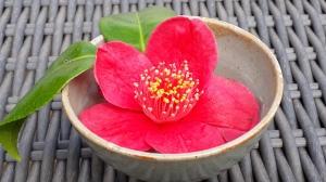 Flower in Bowl
